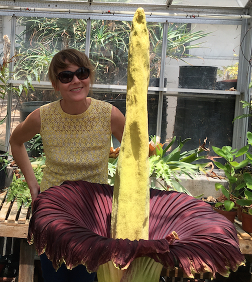 Dr. Fisher with Amorphophallus titanum bloom, May 2016